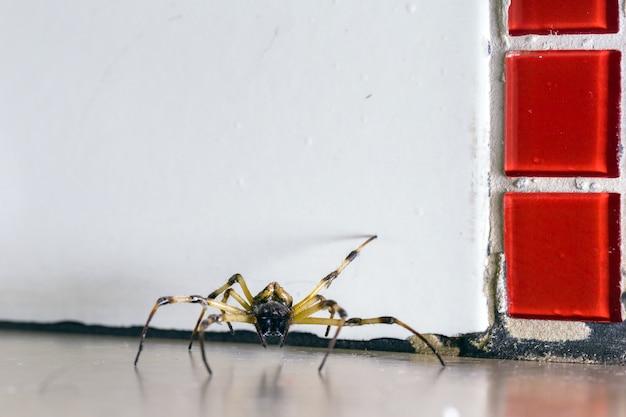 床の上を歩くクモ、家の中に隠された大きなクモ、汚れた床