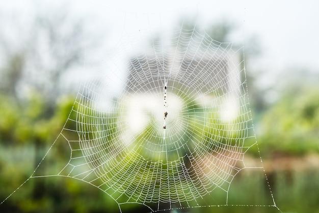 여름날 배경에 흐린 시골집에 거미줄. 필드의 얕은 깊이. 웹에 집중하세요.