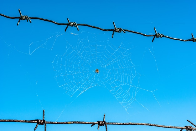 Spider web on barbed wire across clear blue sky