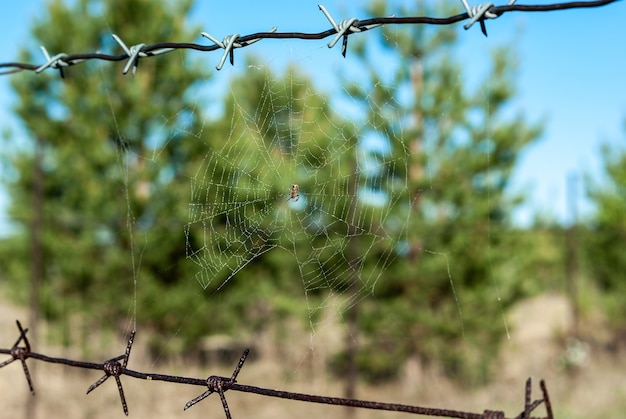 Spider web on barbed wire in the forest