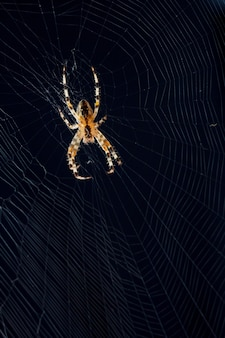 Spider on the web on black background