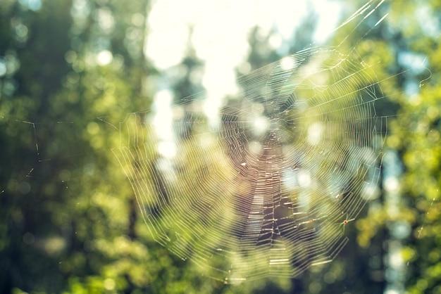 夏の日の緑の自然の背景に森の中のクモの巣のクローズアップ
