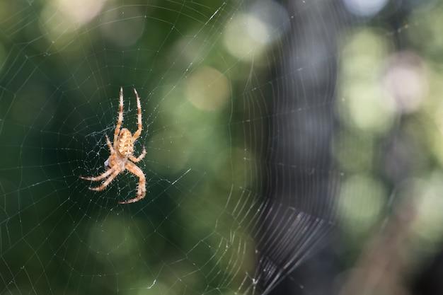 중앙 아시아 숲의 거미줄.