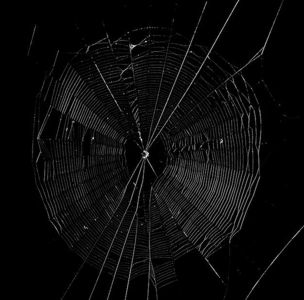 暗い背景のクモの巣