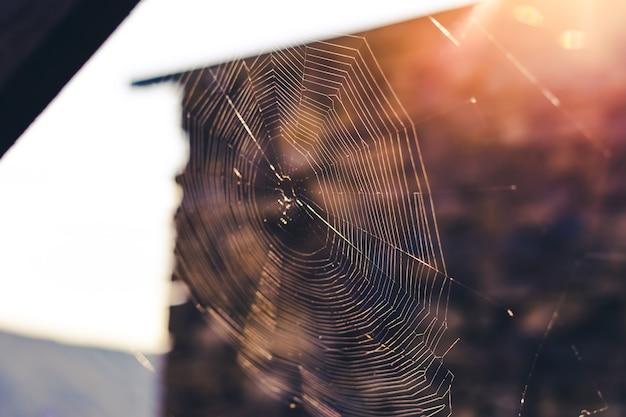 아침 햇살에 거미줄