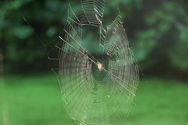 自然の中でクモの巣