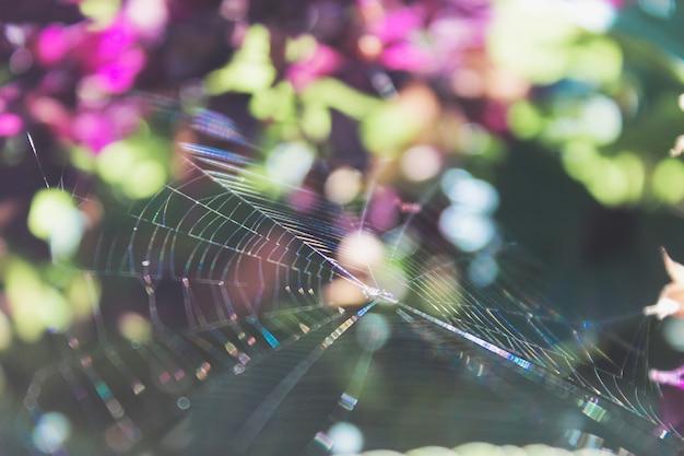 背景をぼかした写真のクモの巣