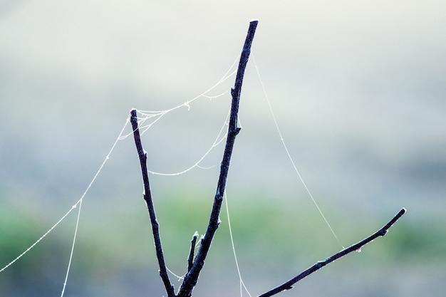 Паутина на сухой ветке дерева в туманное утро