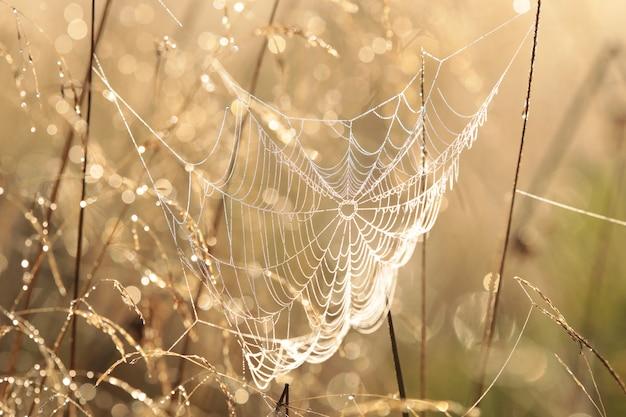 일출 동안 초원에 거미줄