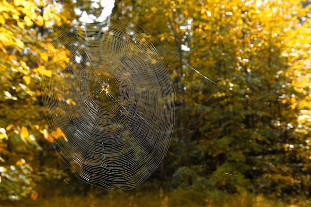 ぼやけた緑の蜘蛛の巣。明るい晴れた秋の日に森の蜘蛛の巣。