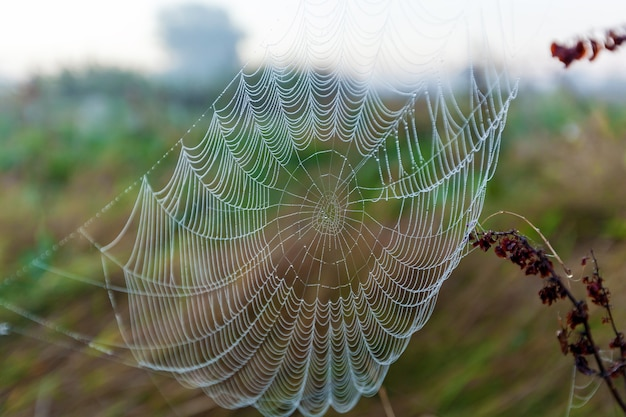 태양과 필드 잔디, 클로즈업의 배경에 거미줄. 태양..