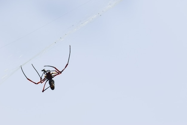 Spider on the web. spider spins spider web.