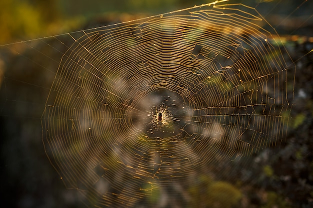 Spider on a web in the sun, in the forest