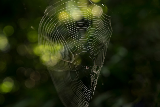 Spider and web in tropical forest.