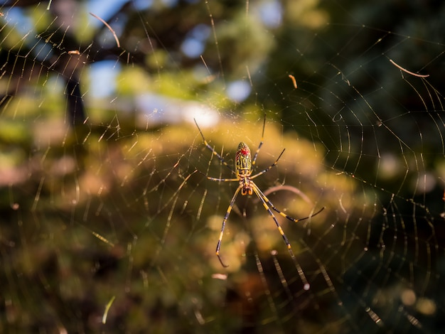 Spider in web with autumn