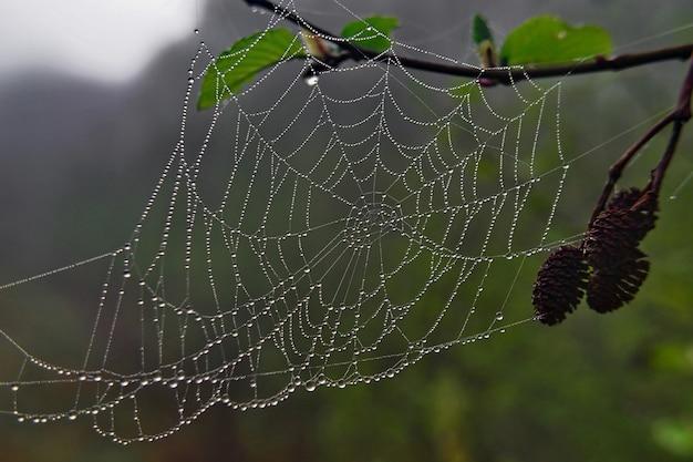 이슬 방울과 거미줄