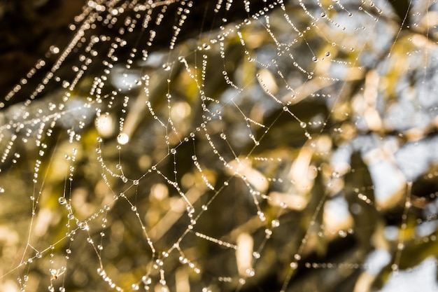 Spider web with dew in the sunshine