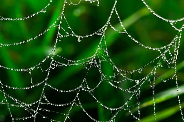잔디 매크로 푸에 이른 아침에 이슬이 있는 거미줄