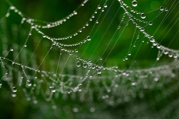 잔디에 이른 아침에 이슬이 있는 거미줄. 선택적 초점