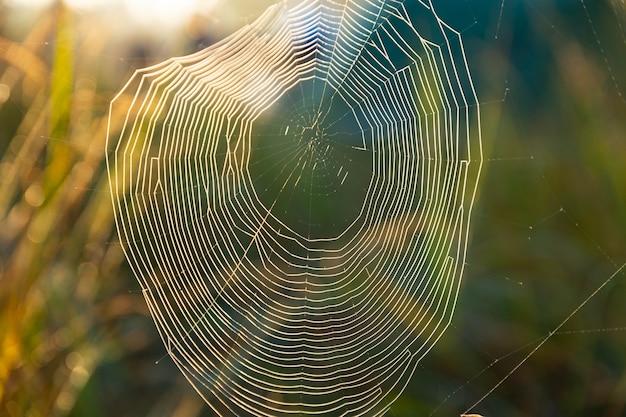 이슬이 맺힌 거미줄, 안개가 낀 차가운 아침에 상처를 입었습니다. 선택적 초점입니다.