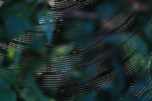 緑の自然の背景とスパイダーウェブ