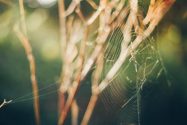 朝の光とクモの巣