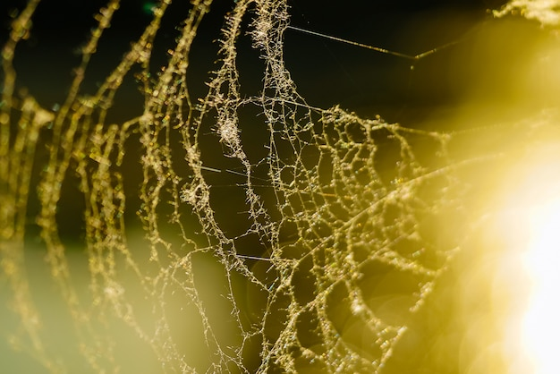 Spider web with sun.