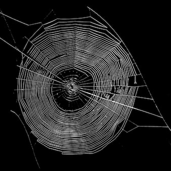 Spider web woven on a black background is a place for advertising