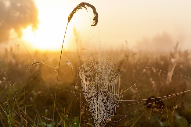 Spider webs against the background of the sun and field grass spider web in the background
