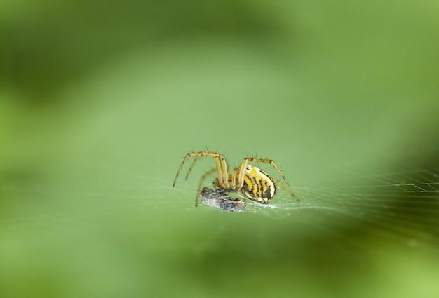 Spider Free Photo