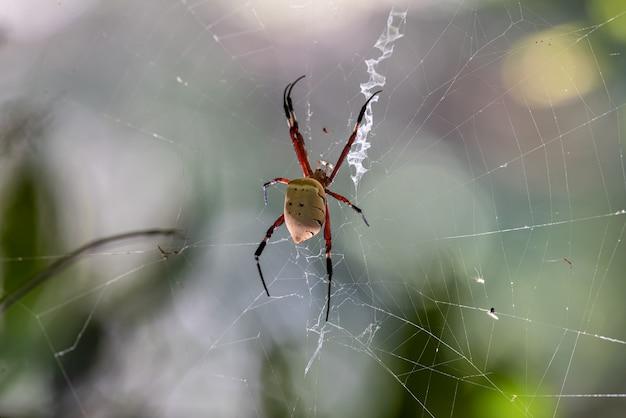 먹이를 기다리는 숲에서 거미줄을 짜는 거미.