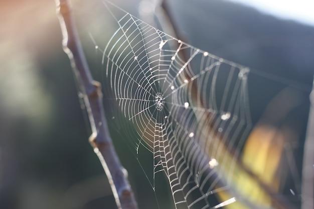 거미줄 거미줄 자연 일몰 나무