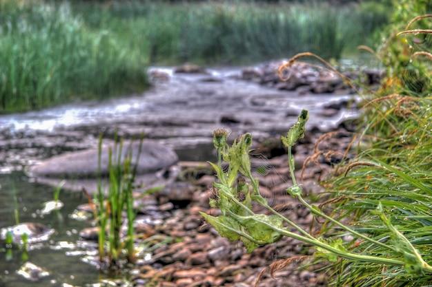 Паутина на шипе на фоне небольшой речки с камнями по берегам и травой вокруг. фон размыт. выборочный фокус. зеленый и коричневый цвета. на растениях утренняя роса.