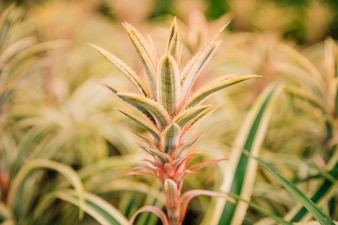 庭でセレクティブフォーカスとスパイクの葉