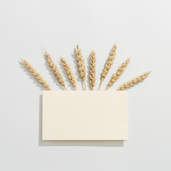 밀의 스파이크를 닫습니다. 곡물 작물. 풍부한 수확 창의적인 개념.