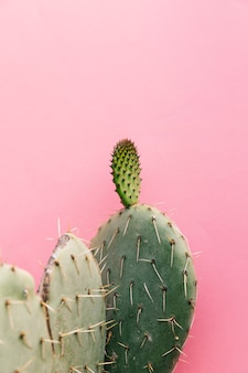 Spiked cactus plant against pink wall