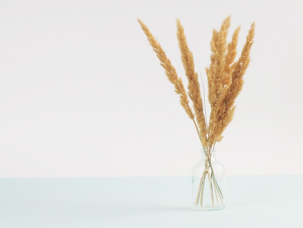 Spikelets of dried flowers lagurus natural color on a white background.