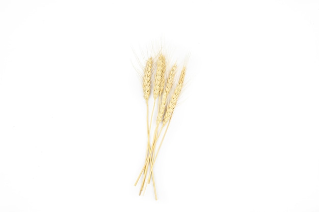 白い背景の上の熟した小麦の小穂は分離します
