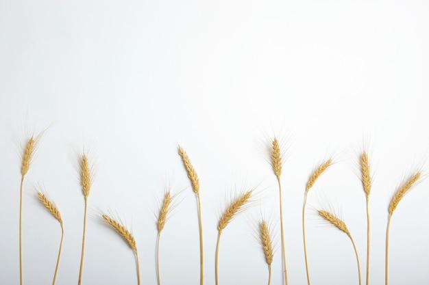 밝은 배경에 밀과 곡물의 이삭 프리미엄 사진