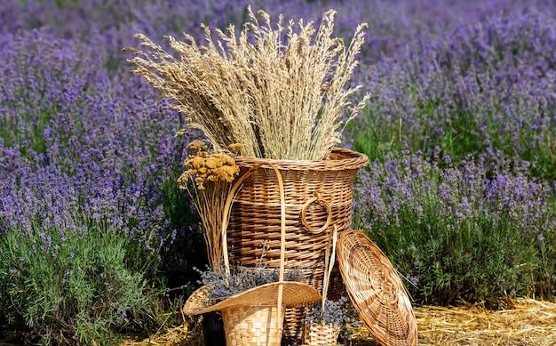 Колоски пшеницы в плетеной корзине над полями лаванды