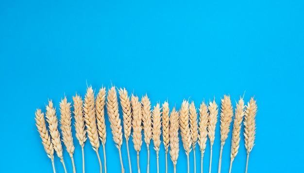 青色の背景に小麦の穂。コピースペースのあるシンプルなフラットレイアウト。