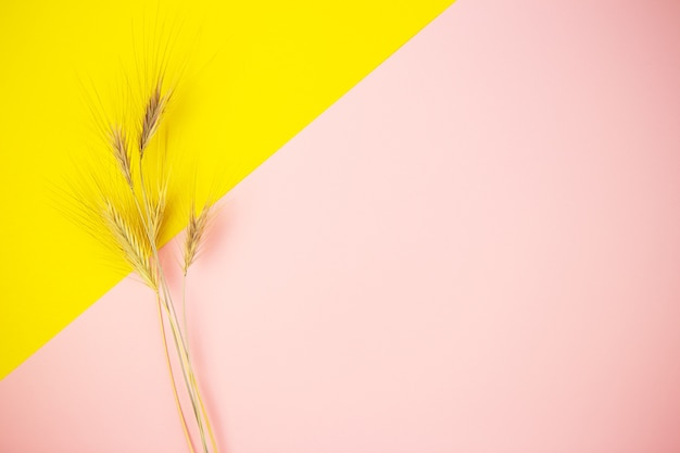 小麦の小穂
