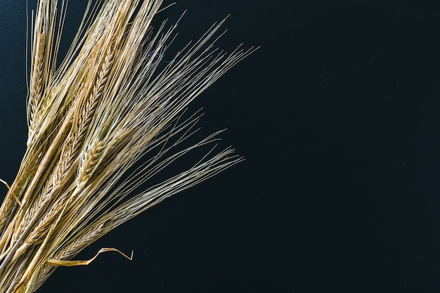 Spikelets of wheat on black wood