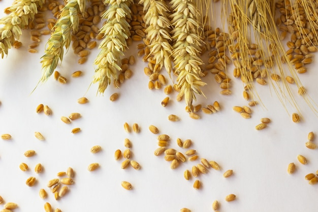 Spikelets of wheat and grain on the white space.