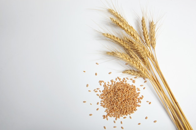 Spikelets of wheat and grains on a light background