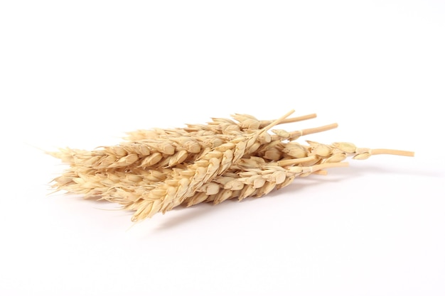 Spikelets of wheat on a white background