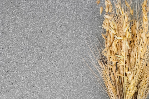 Spikes of wheat and barley on a background of gray granite.