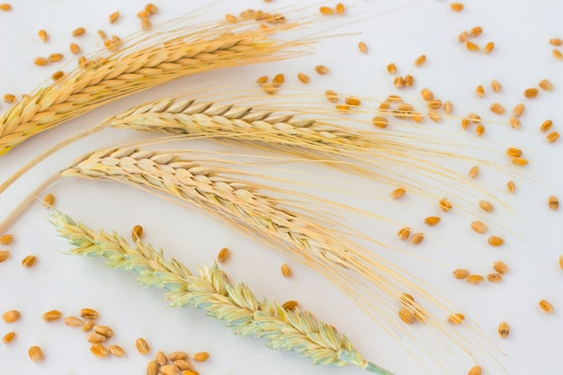 Spikes of wheat and grain on the white table.