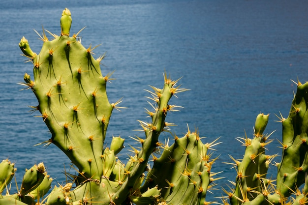 Spiky cactus leaves with the sea