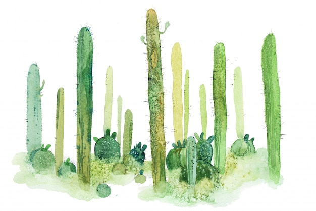 Spiky cactus watercolor illustration